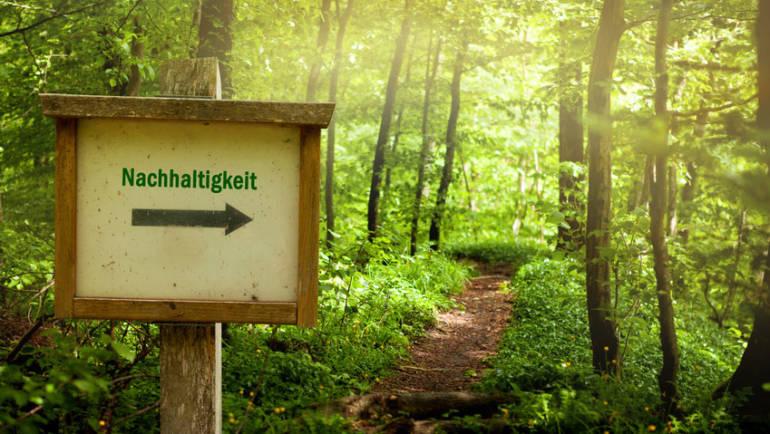 Wald mit Gütesiegel – Holzeinschlag in FSC- und PEFC-zertifizierten Wäldern