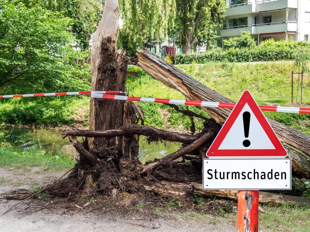 Sturmschäden und umgestürzte Bäume