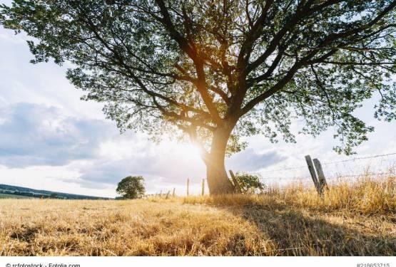 Lange Trockenzeit in Deutschland – Schäden an Bäumen im eigenen Garten?