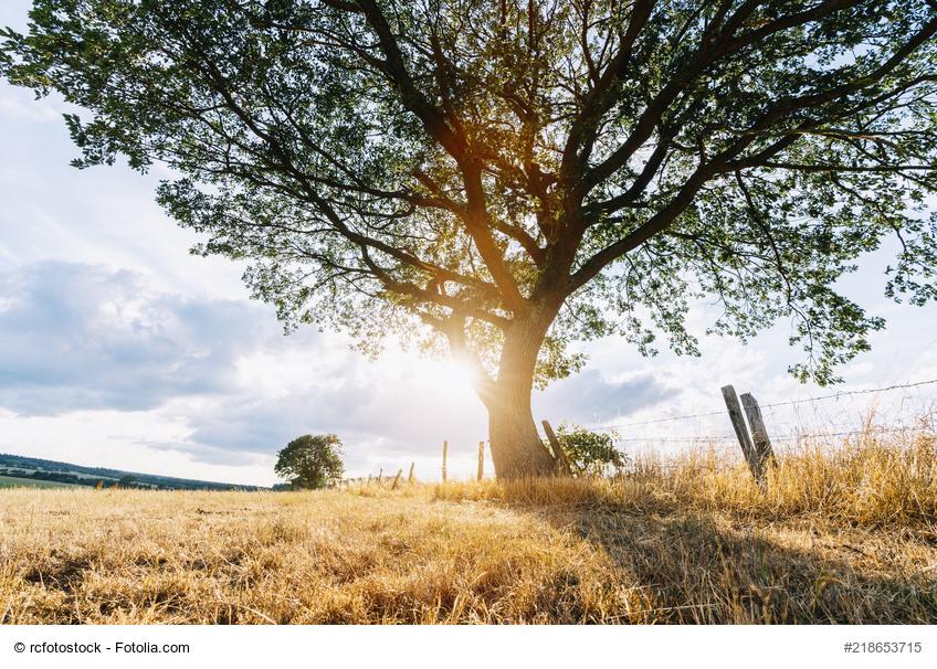 Lange Trockenzeit In Deutschland Schäden An Bäumen Im Eigenen